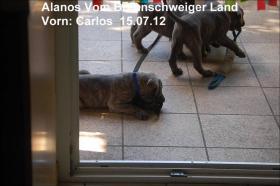 Foto 9 Wurfmeldung! Alanos vom Braunschweiger Land