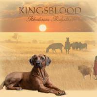 Wurfplanung Rhodesian Ridgeback Welpen Sommer 2013