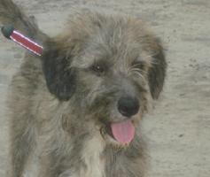 Wuschelhund sucht Kuschelmenschen