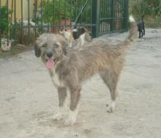 Foto 2 Wuschelhund sucht Kuschelmenschen