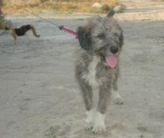 Foto 3 Wuschelhund sucht Kuschelmenschen