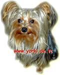 Yorkshire Terrier Welpen auch Biewer, an Katzen gewöhnt! Wir befinden uns im Saarland, 66578 Schiffweiler.