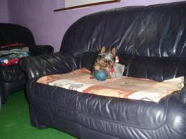 Yorkshire Terrier Welpen mit Stammbaum