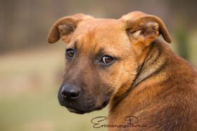 Foto 2 ZECKE - ein bezauberndes Hundemädchen!