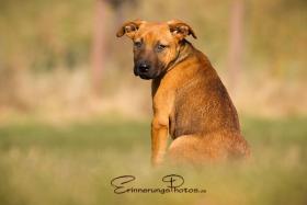 Foto 3 ZECKE - ein bezauberndes Hundemädchen!