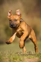 Foto 4 ZECKE - ein bezauberndes Hundem�dchen!