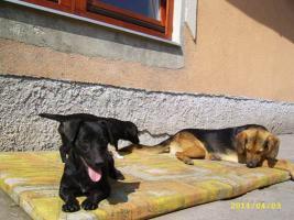 Foto 3 ZOLA mit dem Dackelblick