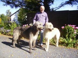 Foto 2 Zauberhafte Irish-Wolfhound-Welpen