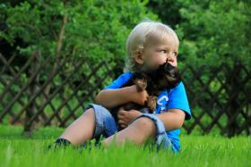 Foto 4 Zauberhafte kleine Yorkshire Welpen suchen einen Freund