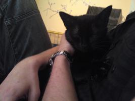 Zickersüße Katzendame sucht liebevolles Zuhause