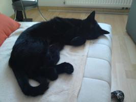 Foto 3 Zickersüße Katzendame sucht liebevolles Zuhause