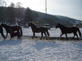 Winter Pferdetraining