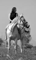 Foto 3 Zu verkaufen ist Stute nach Sahib Kubista (geb. 2002)