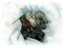 Foto 2 !Zuckers��e Teddybabies!
