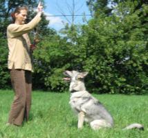 Zum Aufbau einer Tierpension Bauernhof, Resthof oder �hnliches zur Miete gesucht