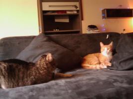 Zwei Hauskatzen abzugeben