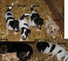 Foto 3 Zwei Hündinnen und drei Rüden suchen ein neues Zuhause!!!