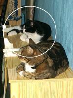 Foto 2 Zwei Kätzchen suchen dringend ein Zuhause
