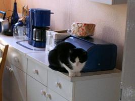 Foto 3 Zwei Kätzchen suchen dringend ein Zuhause