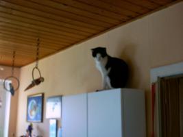 Foto 5 Zwei Kätzchen suchen dringend ein Zuhause