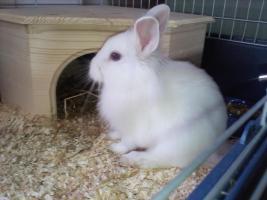 Zwei Kaninchen mit Zubehör zu verkaufen