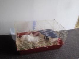 Foto 2 Zwei Kaninchenmädels in liebe Hände abzugeben