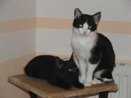 Zwei Katzen suchen liebevolles Zuhause