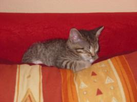 Foto 2 Zwei Kleine Katzen