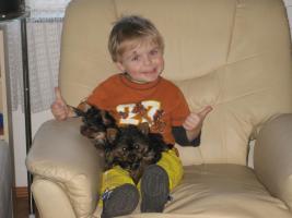 Foto 3 Zwei Yorkshire Terrier – Welpen zu verkaufen!!