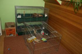 Foto 4 Zwei liebe Zwergkaninchen suchen ein neues Zuhause