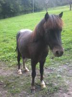 Foto 2 Zwei schöne Ponys