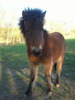 Foto 3 Zwei schöne Ponys