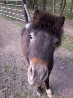 Foto 4 Zwei schöne Ponys