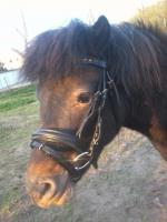 Foto 5 Zwei schöne Ponys