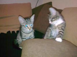 Zwei süße Katzenkinder