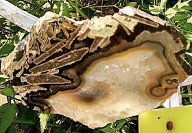 Foto 4 achatscheibe  edelstein mit einzigartigen einschlüssen