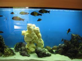 aquarium mit barschbsesatz