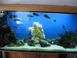 Foto 2 aquarium mit barschbsesatz