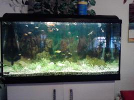 aquarium  200l und 40 l
