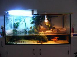 aquarium+tiere