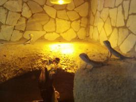 Foto 3 bartagamen jungtiere