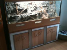 Foto 3 bartagamen paar und terrarium