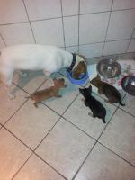 die kleinen mit ihrer Bulldogen spiel Gefährtin