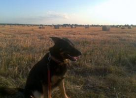 Foto 5 comford dog . seelsorgehund military comford dog squad k9  dog team nrw