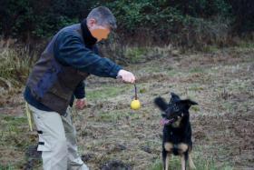 Foto 11 comford dog . seelsorgehund military comford dog squad k9  dog team nrw