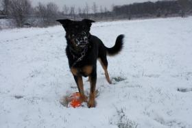 Foto 12 comford dog . seelsorgehund military comford dog squad k9  dog team nrw