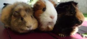 Foto 6 drei kleine schweinchen suchen...