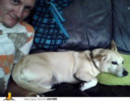 ein lieben hund abzugeben