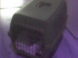 Foto 4 eine katze