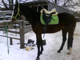 eine zuverlässige Reitbeteiligung für mein Pferd Roxy